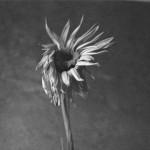 Already Broken, by Joyce Kornblatt