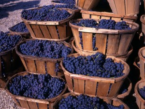 Provence-cote-du-rhone