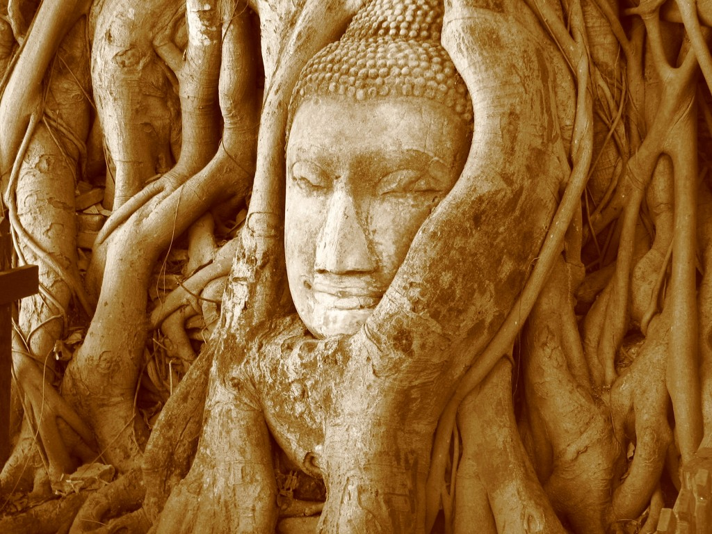 McKay Savage, Close-up of the Buddha head in the banyan tree at Wat Mahathat, Wikipedia