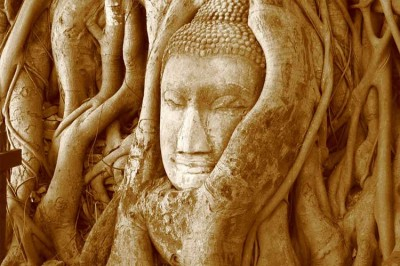 McKay Savage, Close-up of the Buddha head in the banyan tree at Wat Mahathat, Wikimedia