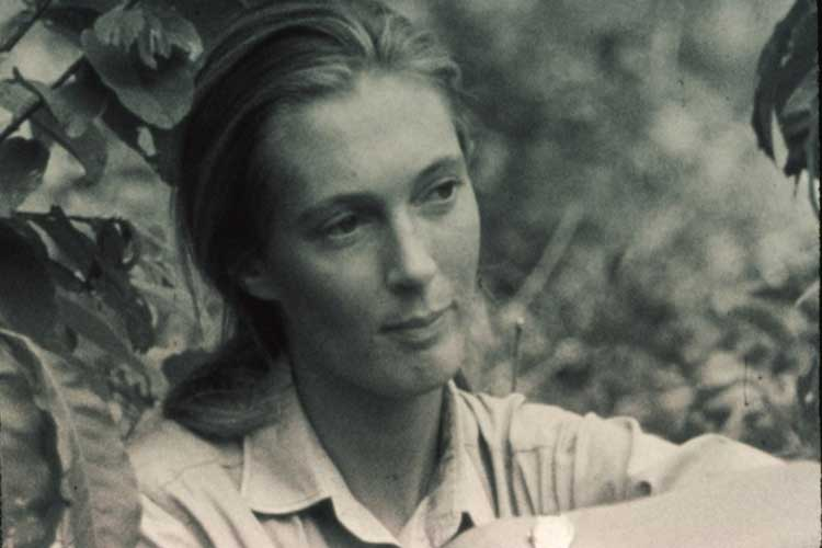 term paper on through a window by jane goodall Order custom written paper on jane goodall live  the general public was also becoming acquainted with goodall's work through a series of articles in national .