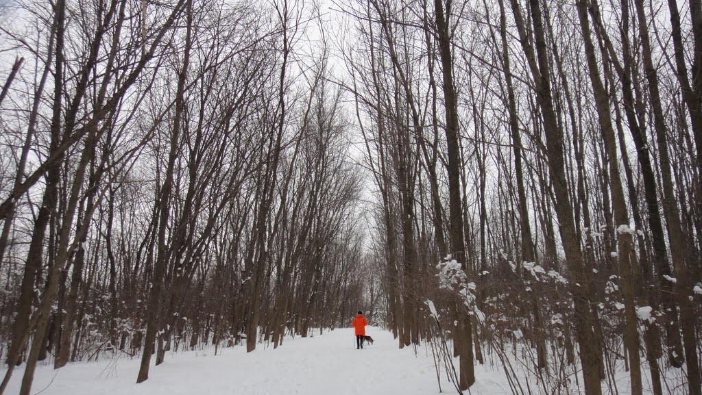 Photograph by Lynn Friedman, Winter Walk