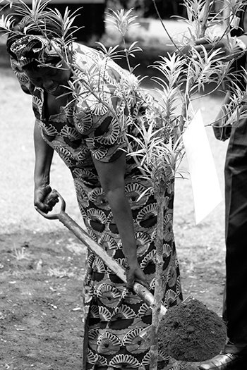 Wangari Maathai Planting a Tree in Nyeri, Kenya, to mark the launch of her autobiography, Unbowed. Photo by Wanjira Mathai, Sept. 30, 2006