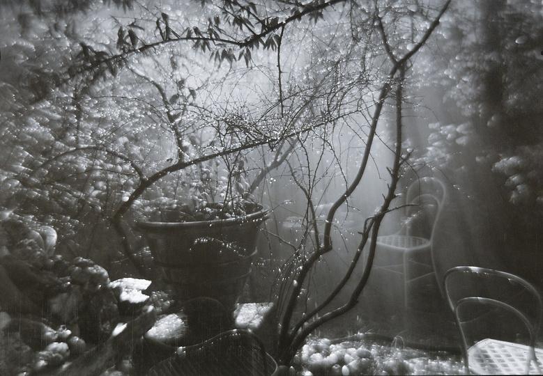 Josef Sudek, A Summer Shower in the Magic Garden, 1954-59.