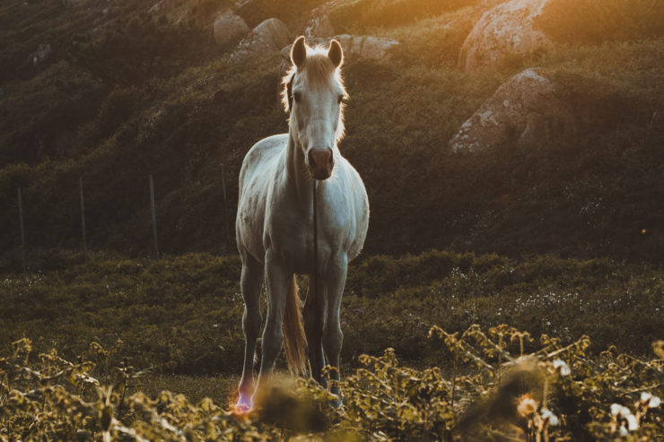 A Parabola Bestiary: Horses, by Alice van Buren